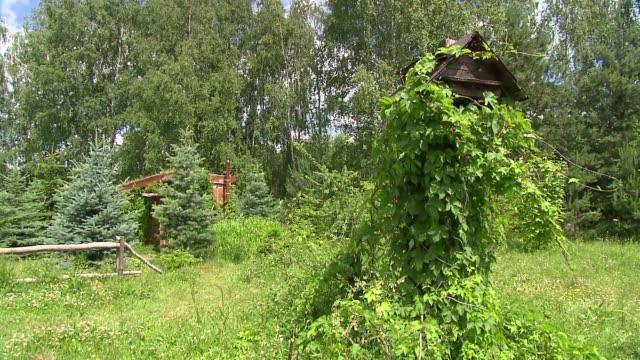 vídeos y material grabado en eventos de stock de bird table in garden - baño para pájaros