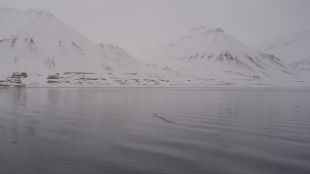 bird taking of from water at svalbard. - water bird stock videos & royalty-free footage