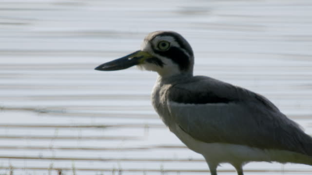 bird - water bird stock videos & royalty-free footage