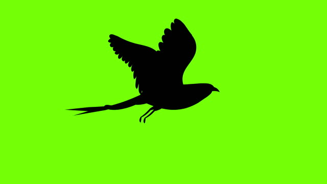 bird - plain background stock videos & royalty-free footage
