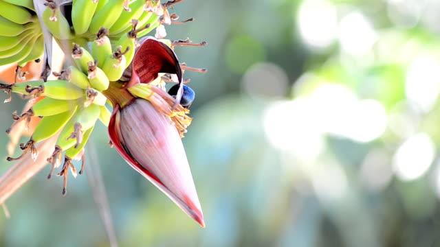 vídeos de stock e filmes b-roll de pássaro - beija flor