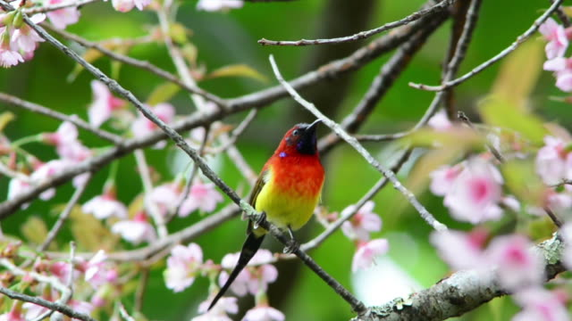 bird - songbird stock videos & royalty-free footage