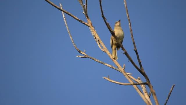 bird - twig stock videos & royalty-free footage