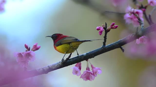 vídeos de stock e filmes b-roll de pássaro - movimento perpétuo