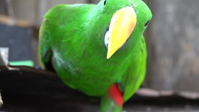 vídeos de stock, filmes e b-roll de pássaro - cabelo verde