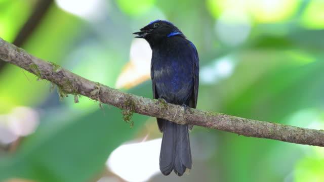bird - birdsong stock videos & royalty-free footage