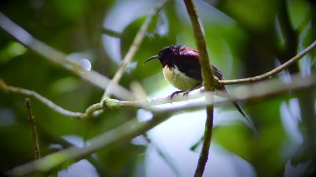 vídeos de stock, filmes e b-roll de pássaro - bater asas