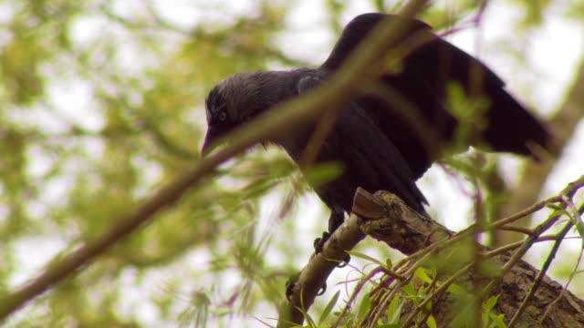 bird - animal wing stock videos & royalty-free footage