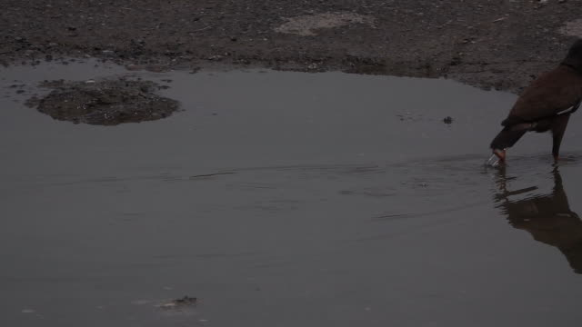 ein vogel, der im wasser schwimmt - water bird stock-videos und b-roll-filmmaterial