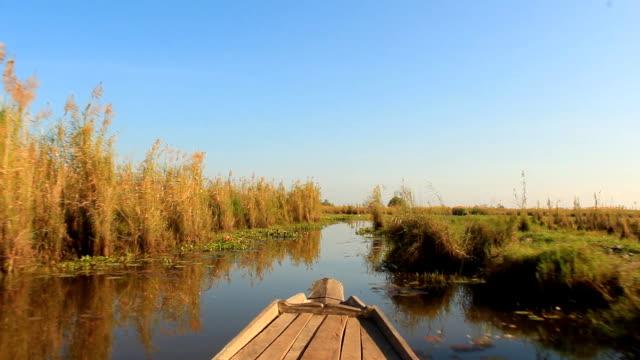 vídeos de stock, filmes e b-roll de barco para os observadores de pássaros em - pântano