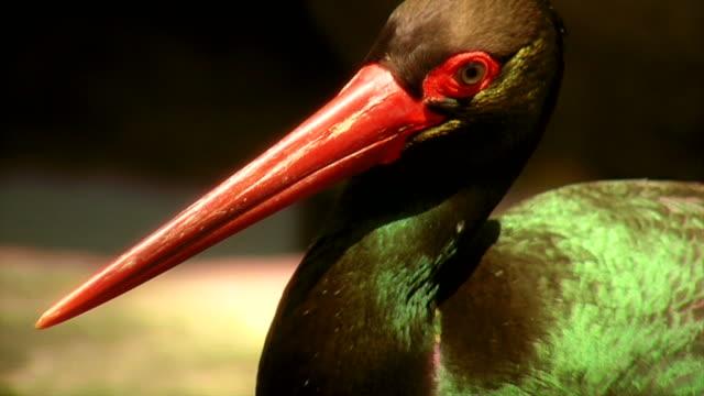 Vogel mit roten Schnabel