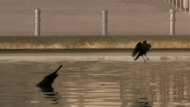 vídeos y material grabado en eventos de stock de baño para pájaros piscina reflectante, san francisco - baño para pájaros