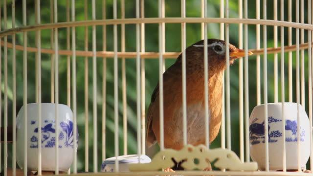 stockvideo's en b-roll-footage met ls ecu birdcages in park/xian,shaanxi,china - dier in gevangenschap