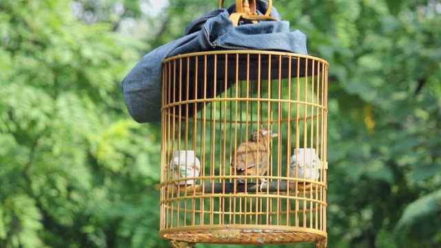 stockvideo's en b-roll-footage met ls birdcages in park/xian,shaanxi,china - dier in gevangenschap