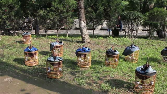 stockvideo's en b-roll-footage met pan ws birdcages in park/xian,shaanxi,china - dier in gevangenschap