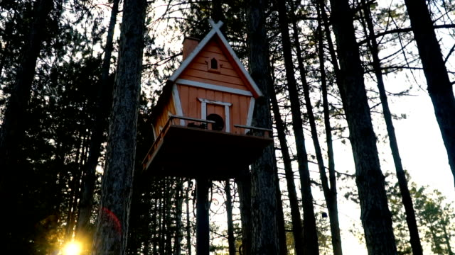 birdhouse on a pine tree - birdhouse stock videos & royalty-free footage