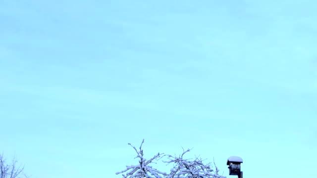 Birdhouse on the tree under the snow