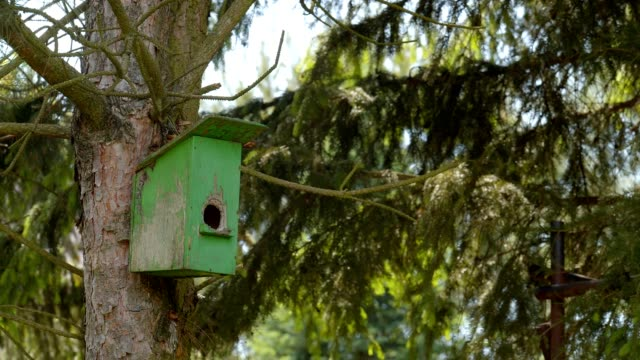 stockvideo's en b-roll-footage met vogelhuisje - young animal