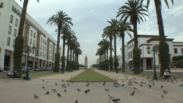 ws birds and palm trees on avenue mohamed v, rabat, morocco - rabat morocco stock videos & royalty-free footage