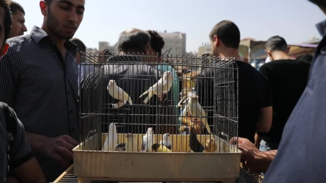 birds are for sale at a weekly market on may 11, 2018 in gaza city, gaza. for the 1.9 million palestinians living inside the gaza strip life has... - 14 15 years stock videos & royalty-free footage