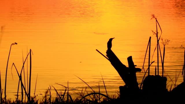 birds are looking - nightingale stock videos & royalty-free footage