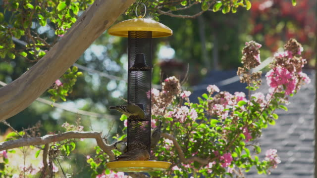 birds at backyard bird feeder - bird stock videos & royalty-free footage