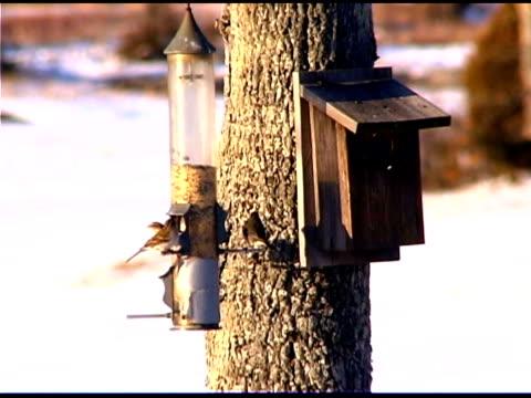 vídeos y material grabado en eventos de stock de birds at birdfeeder in winter - grupo pequeño de animales
