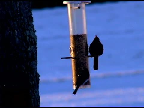 vídeos y material grabado en eventos de stock de birds at birdfeeder in winter, york, south carolina - grupo pequeño de animales