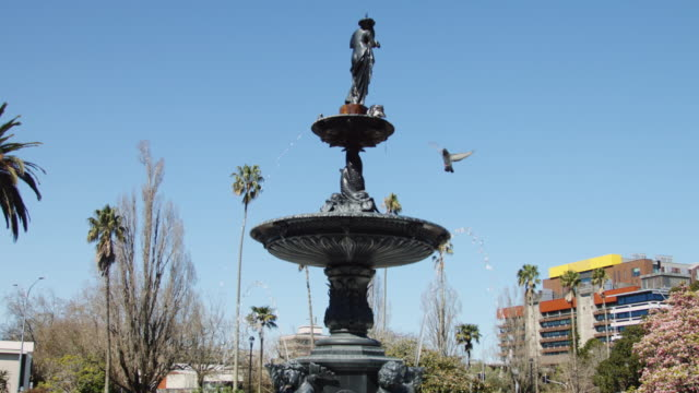 Birds Bathing in City Fountain