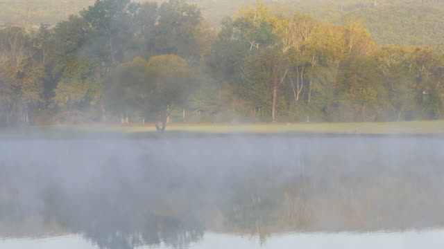 birds chirping in autumn sunny morning - steam stock videos & royalty-free footage