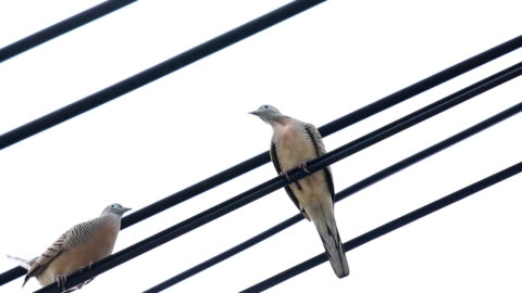 birds courting on wire - resting stock videos & royalty-free footage