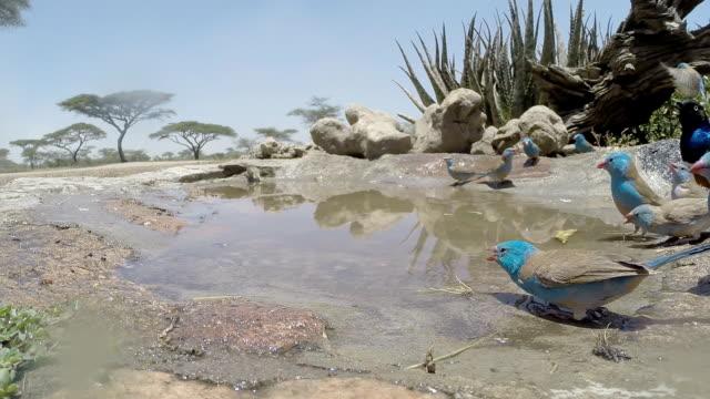 vídeos y material grabado en eventos de stock de aves beber - baño para pájaros