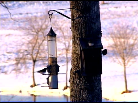 birds eat birdfeeder - medium group of animals stock videos & royalty-free footage
