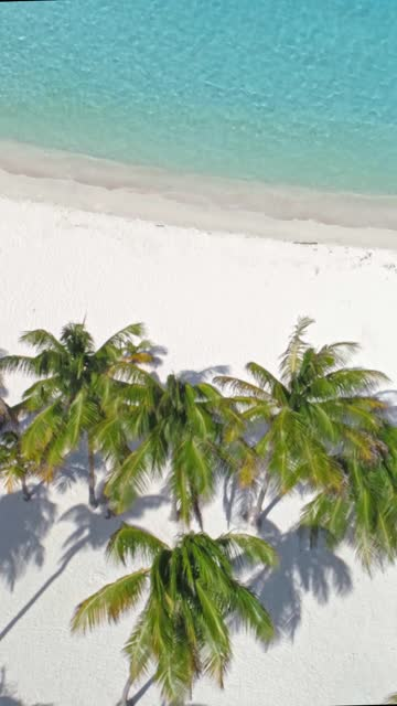 vídeos de stock e filmes b-roll de bird's eye or high angle view of tropical island beach with coconut trees, sand, waves and turquoise waters - ilha