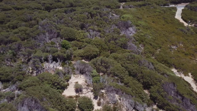 bird's eye view of 90 mile beach and landscape, victoria, australia - sea bass stock videos & royalty-free footage