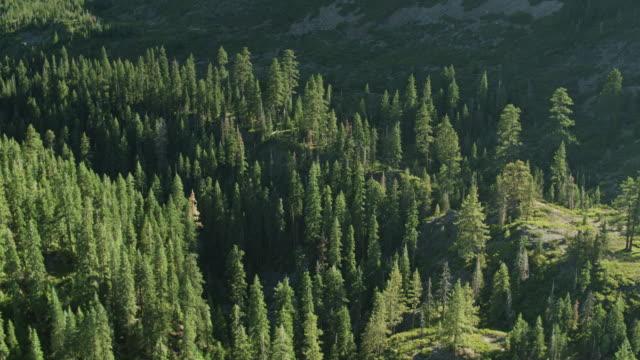 シエラネバダの森林の鳥の視点 - 国有林点の映像素材/bロール