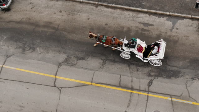 bird's eye view of horse-drawn carriage in montreal - spoonfilm stock-videos und b-roll-filmmaterial