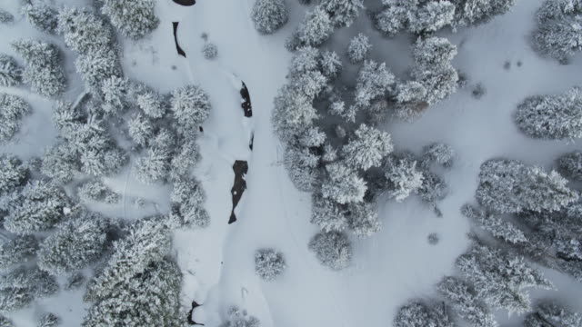 birds eye view of snow covered trees - colorado stock videos & royalty-free footage