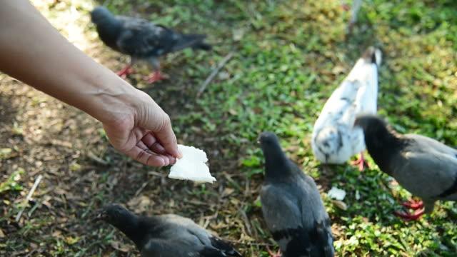 vídeos de stock e filmes b-roll de tm aves alimentação manual - hd format