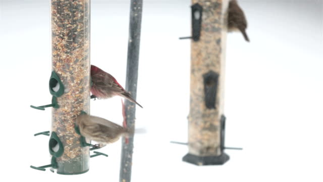 birds feeding, eating seeds in winter time - birdhouse stock videos & royalty-free footage