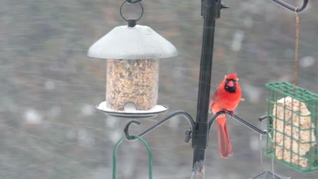 Vögel füttern, Essen Samen im winter
