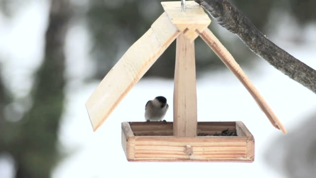 Birds feeding in a small wooden house
