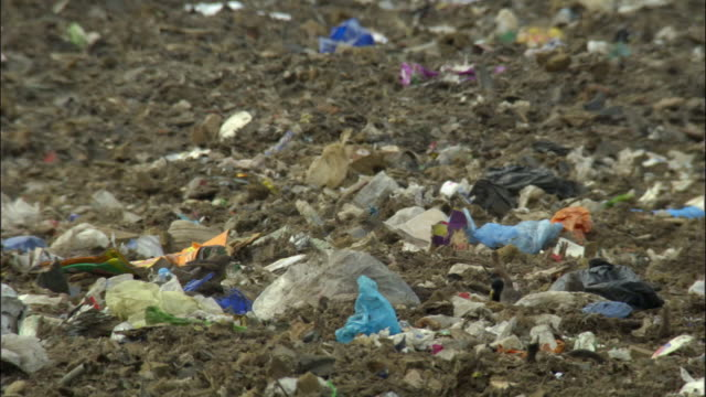 ms, pan, birds feeding in landfill site, ardley, oxfordshire, united kingdom - oxfordshire stock videos & royalty-free footage