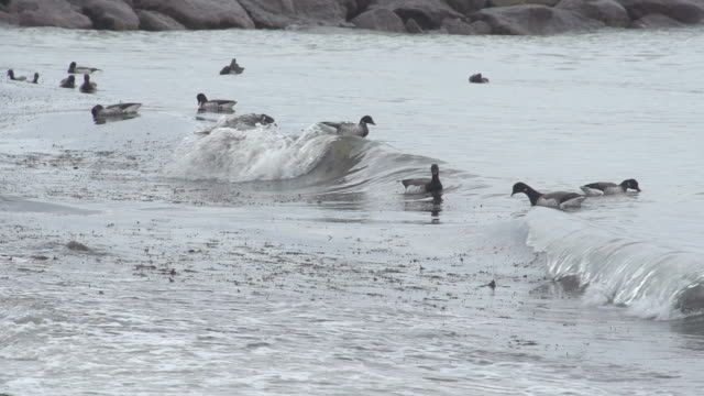 birds floating on incoming waves - oil spill stock videos & royalty-free footage
