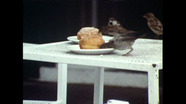 birds flock onto cafe table to eat unsupervised cakes; 1971 - sparrow stock videos & royalty-free footage
