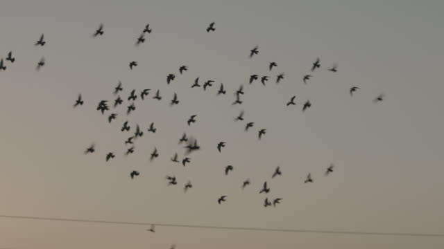 vidéos et rushes de birds fly above denver during sunset - câble