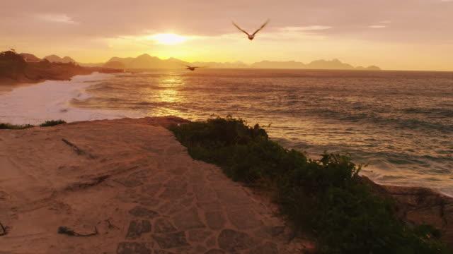 birds fly across a warm pan shot of the sunset at ipanema beach in rio de janeiro - 2匹点の映像素材/bロール