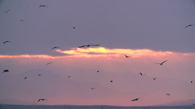 birds fly against beautiful background of sunrise sky, medium pan - formation flying stock videos & royalty-free footage