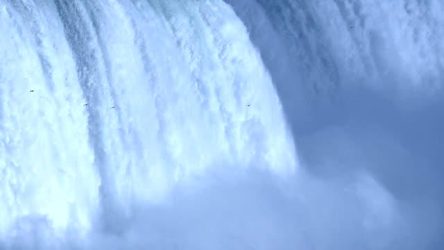 vídeos de stock e filmes b-roll de pássaros mosca em niagara celeste - niagara falls city estado de nova iorque