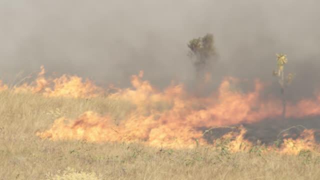 birds fly over burning cerrado grassland. - cerrado stock videos & royalty-free footage